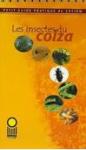 Les insectes du colza